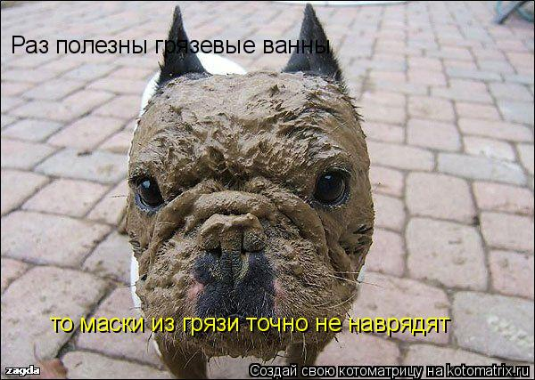 Котоматрица: Раз полезны грязевые ванны  то маски из грязи точно не наврядят
