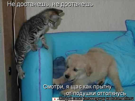 Котоматрица: Не достанешь, не достанешь Смотри, я щас как прыгну от подушки оттолкнусь