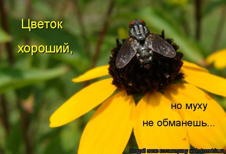 Котоматрица: но муху не обманешь... Цветок хороший,