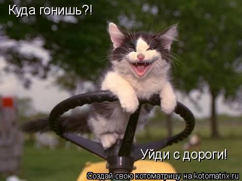 Котоматрица: Куда гонишь?! Уйди с дороги!
