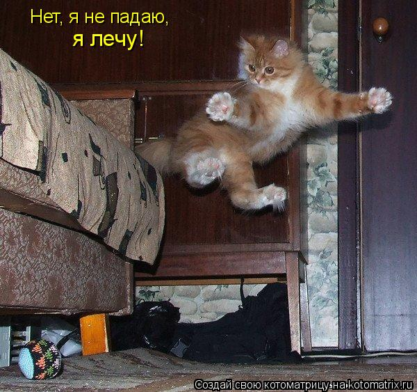 Котоматрица: Нет, я не падаю, я лечу!