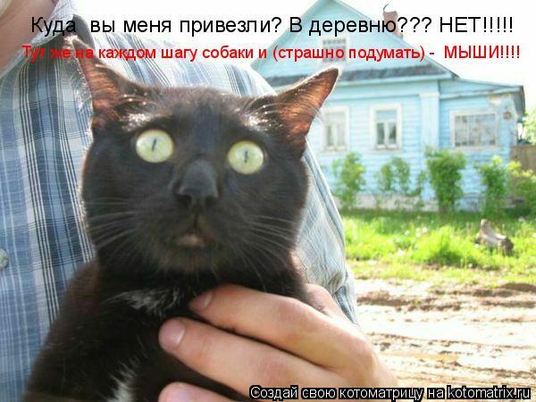 Котоматрица: Куда  вы меня привезли? В деревню??? НЕТ!!!!! Тут же на каждом шагу собаки и (страшно подумать) -  МЫШИ!!!!