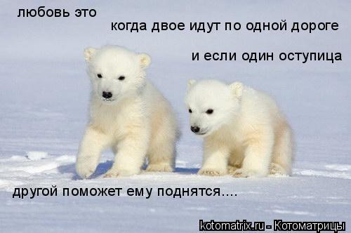 Котоматрица: любовь это когда двое идут по одной дороге и если один оступица другой поможет ему поднятся....