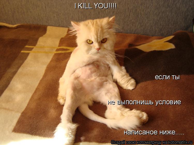 Котоматрица: I KILL YOU!!!! если ты не выполнишь условие написаное ниже.....