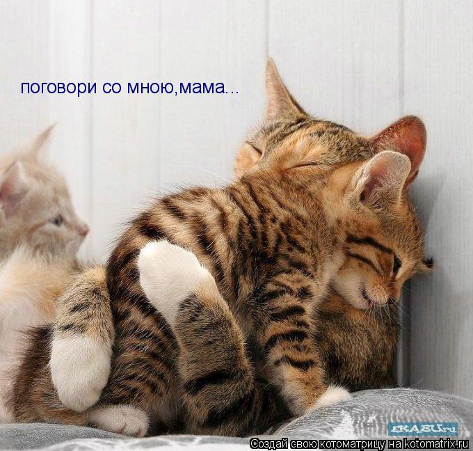 Котоматрица: поговори со мною,мама...