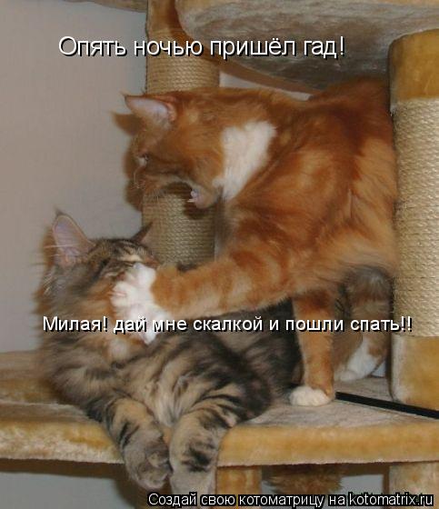 Котоматрица: Опять ночью пришёл гад! Милая! дай мне скалкой и пошли спать!!