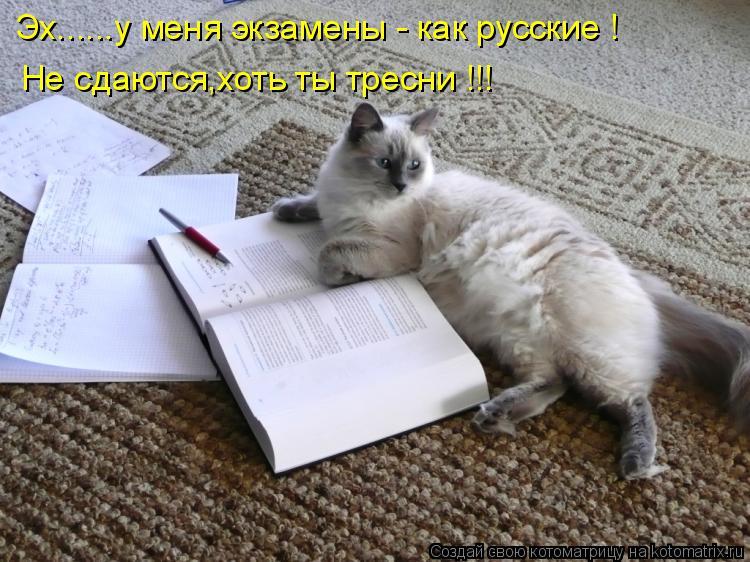 Котоматрица: Не сдаются,хоть ты тресни !!! Эх......у меня экзамены - как русские !