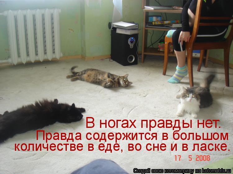 Котоматрица: В ногах правды нет. Правда содержится в большом  количестве в еде, во сне и в ласке.