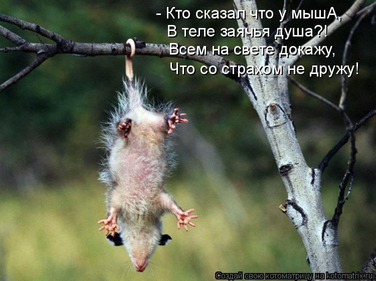 Котоматрица: - Кто сказал что у мышА, В теле заячья душа?! Всем на свете докажу, Что со страхом не дружу!