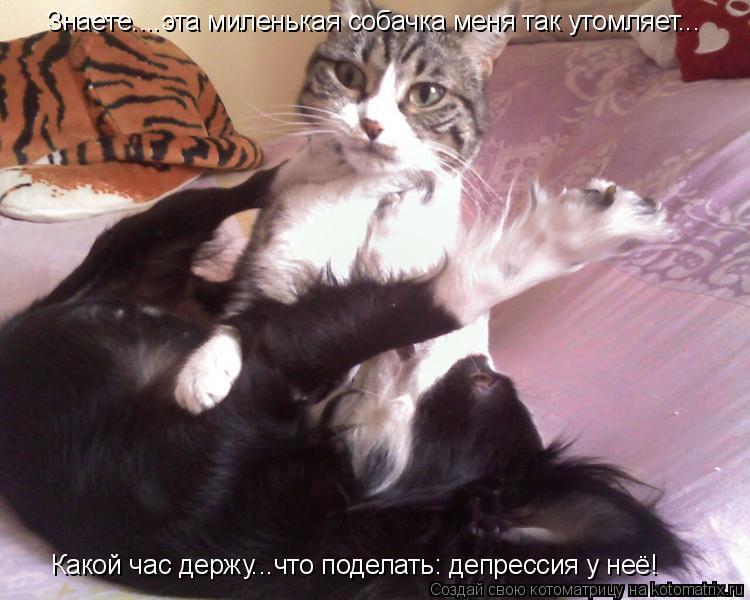 Котоматрица: Знаете....эта миленькая собачка меня так утомляет... Какой час держу...что поделать: депрессия у неё!