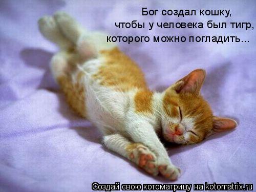 Котоматрица: Бог создал кошку, чтобы у человека был тигр, которого можно погладить...