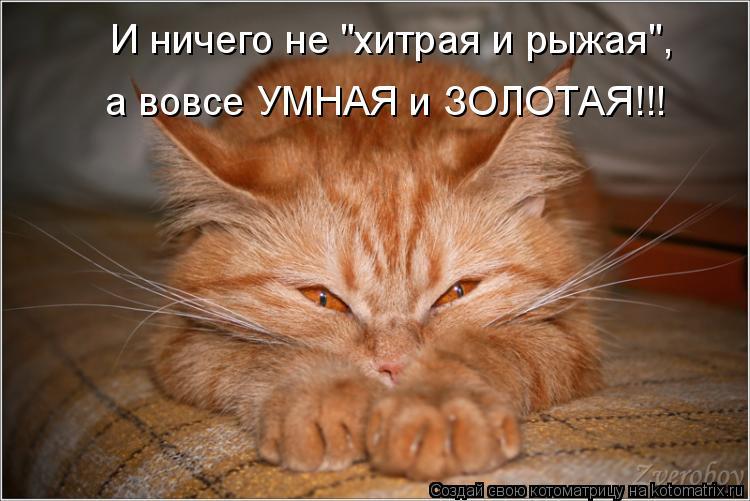 """Котоматрица: И ничего не """"хитрая и рыжая"""", а вовсе УМНАЯ и ЗОЛОТАЯ!!!"""