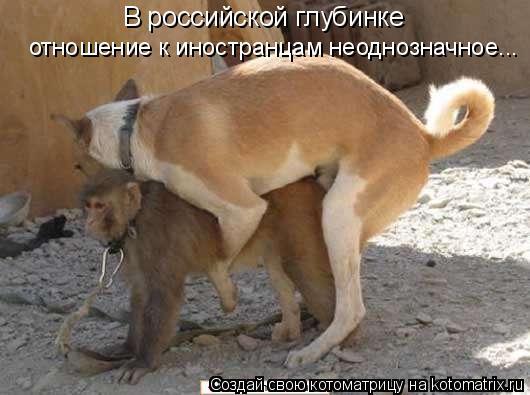 Котоматрица: В российской глубинке  отношение к иностранцам неоднозначное...
