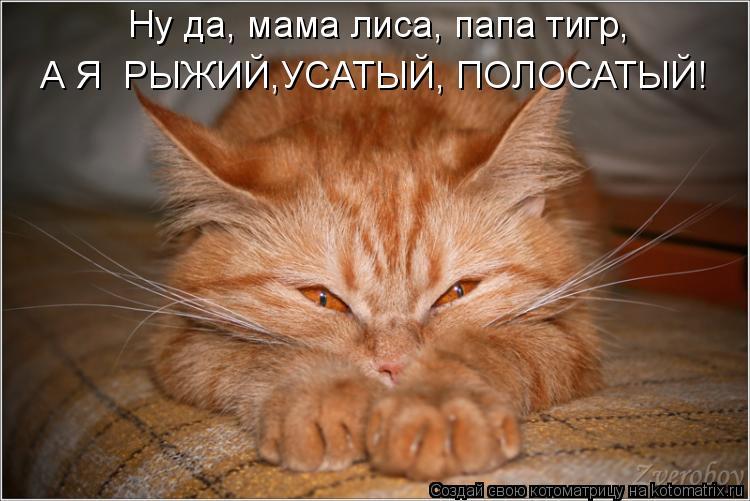 Котоматрица: Ну да, мама лиса, папа тигр,  А Я  РЫЖИЙ,УСАТЫЙ, ПОЛОСАТЫЙ!