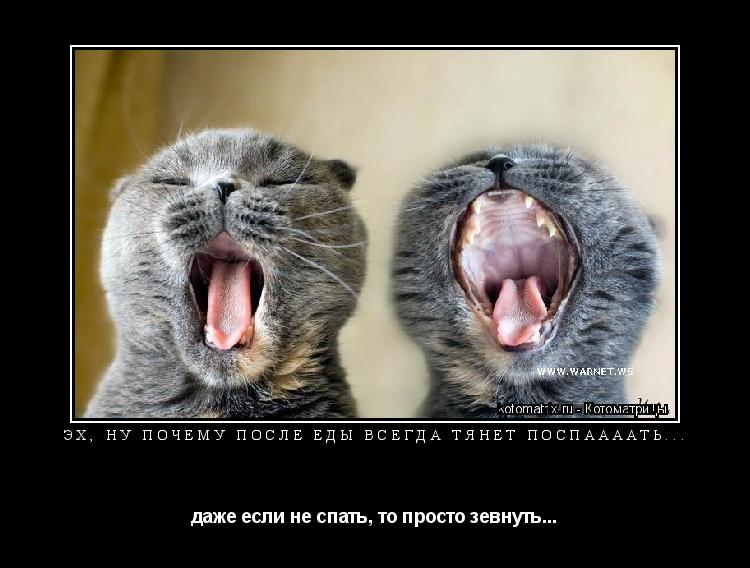 Котоматрица: Эх, ну почему после еды всегда тянет поспаааать... даже если не спать, то просто зевнуть...