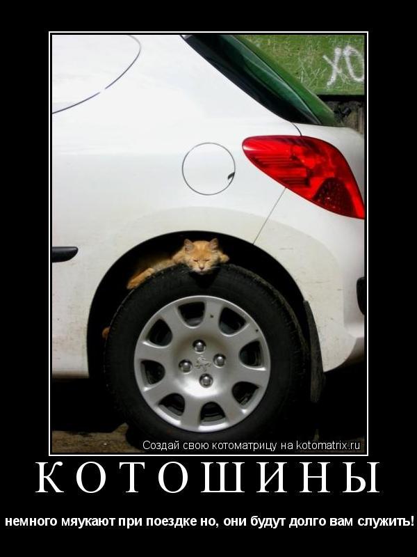 Котоматрица: Котошины  немного мяукают при поездке но, они будут долго вам служить!