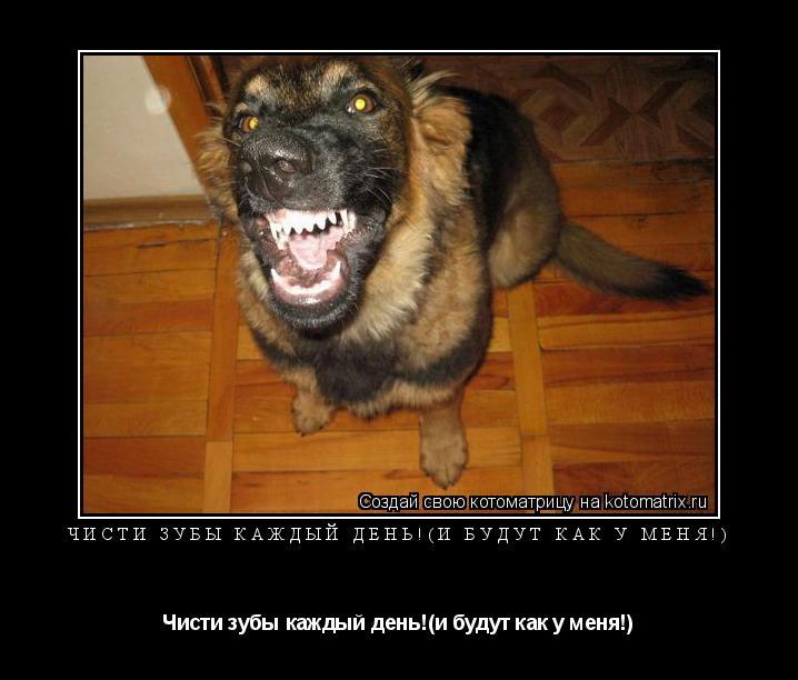 Котоматрица: Чисти зубы каждый день!(и будут как у меня!) Чисти зубы каждый день!(и будут как у меня!)