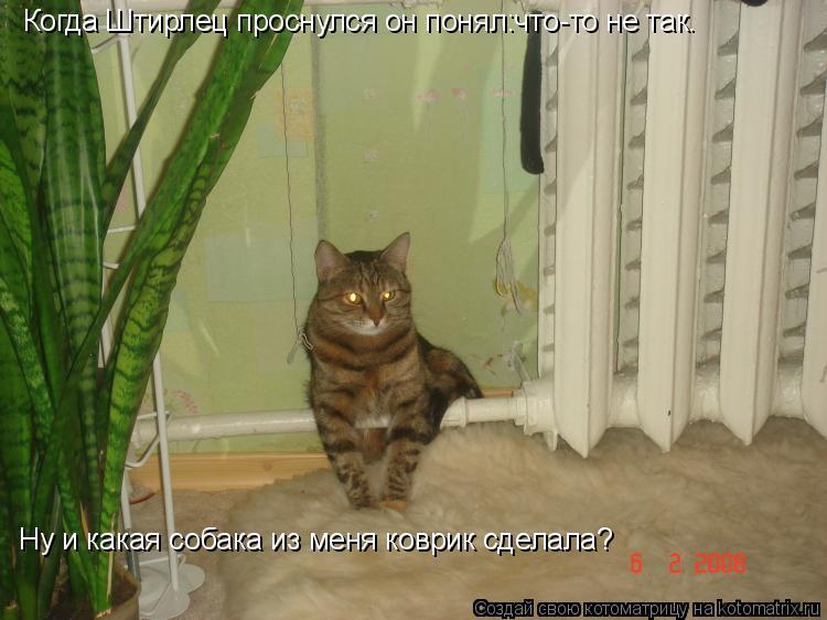 Котоматрица: Ну и какая собака из меня коврик сделала? Когда Штирлец проснулся он понял:что-то не так.