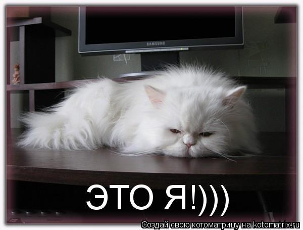 Котоматрица: ЭТО Я!)))