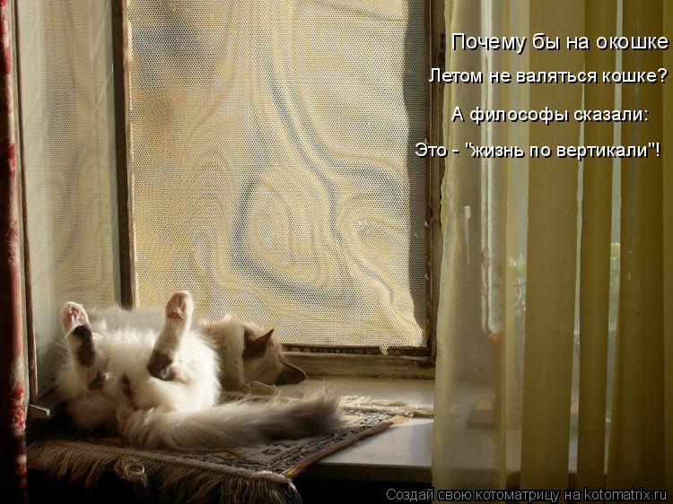 """Котоматрица: Почему бы на окошке  Летом не валяться кошке? А философы сказали: Это - """"жизнь по вертикали""""!"""