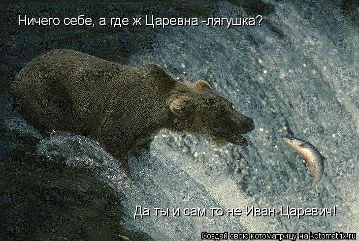 Котоматрица: Ничего себе, а где ж Царевна -лягушка? Да ты и сам то не Иван-Царевич!