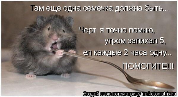Котоматрица: Черт, я точно помню, утром запихал 5, ел каждые 2 часа одну... Там еще одна семечка должна быть... ПОМОГИТЕ!!!