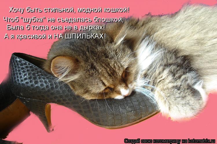 """Котоматрица: Хочу быть стильной, модной кошкой! Чтоб """"шубка"""" не съедалась блошкой, Была б тогда она не в дырках! А я красивой и НА ШПИЛЬКАХ!"""
