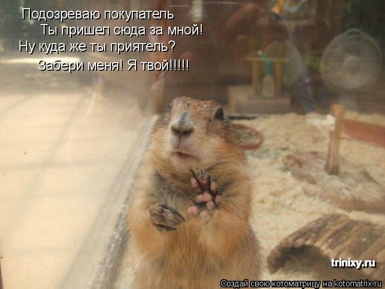 Котоматрица: Подозреваю покупатель Ты пришел сюда за мной! Ну куда же ты приятель? Забери меня! Я твой!!!!!