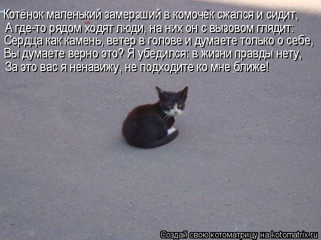 Котоматрица: Котёнок маленький замерзший в комочек сжался и сидит, А где-то рядом ходят люди, на них он с вызовом глядит: Сердца как камень, ветер в голове