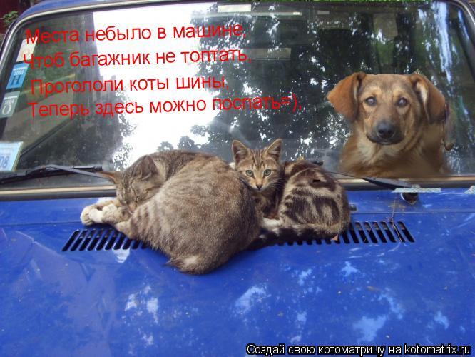 Котоматрица: Места небыло в машине, Чтоб багажник не топтать, Прогололи коты шины, Теперь здесь можно поспать=),