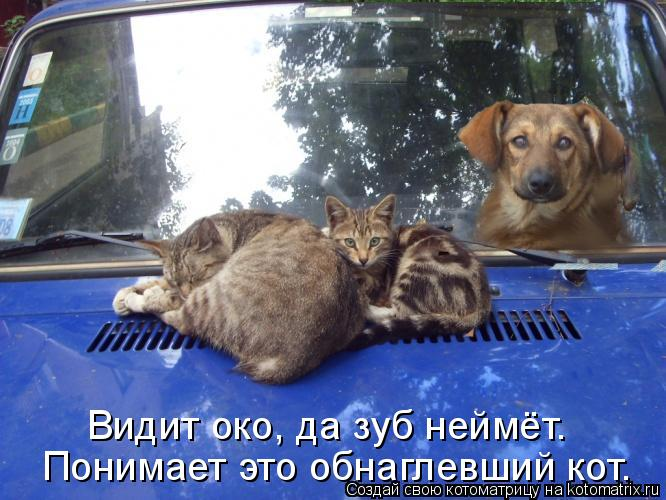 Котоматрица: Видит око, да зуб неймёт. Понимает это обнаглевший кот.