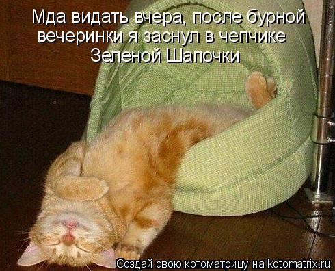 Котоматрица: Мда видать вчера, после бурной вечеринки я заснул в чепчике  Зеленой Шапочки