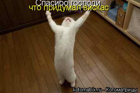 Котоматрица: Спасибо господи что придумал вискас