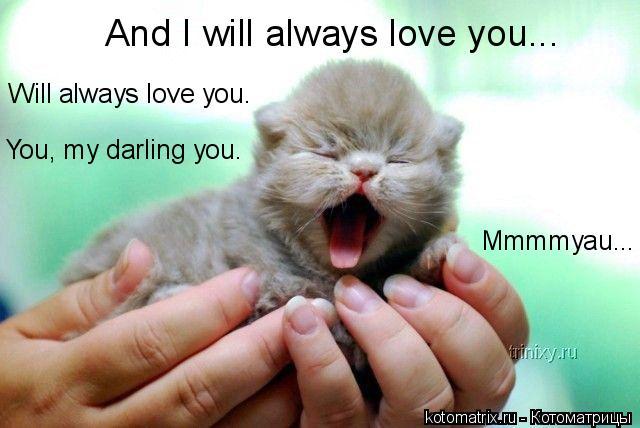 Котоматрица: And I will always love you... Will always love you. You, my darling you. Mmmmyau...