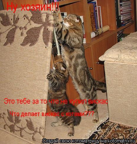 Котоматрица: Ну хозяин!!! Это тебе за то что не купил вискас Что делает вискас с котами???