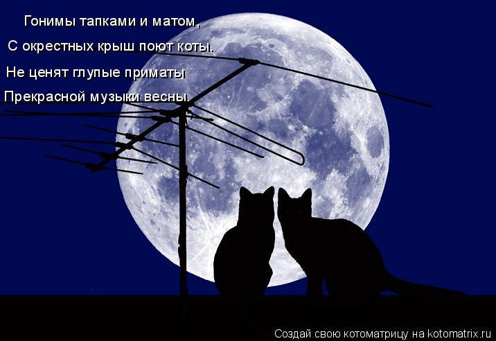Котоматрица: Гонимы тапками и матом, С окрестных крыш поют коты. Не ценят глупые приматы Прекрасной музыки весны.