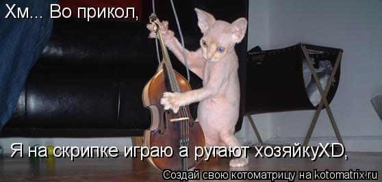 Котоматрица: Хм... Во прикол, Я на скрипке играю а ругают хозяйкуXD,
