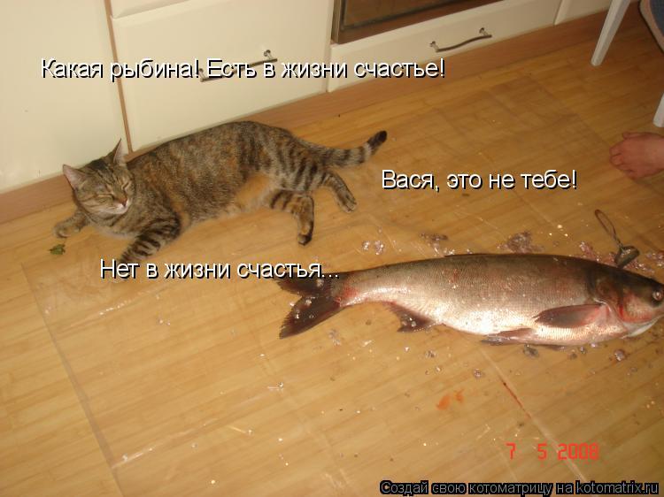 Котоматрица: Какая рыбина! Есть в жизни счастье! Вася, это не тебе! Нет в жизни счастья...