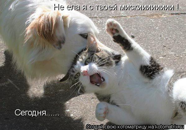 Котоматрица: Не ела я с твоей мискииииииии ! Сегодня......