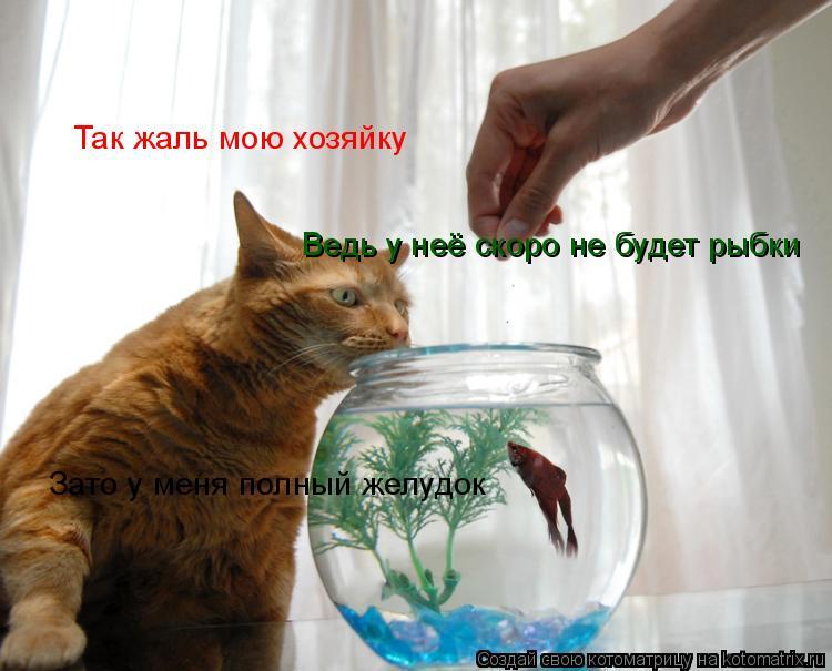Котоматрица: Так жаль мою хозяйку Ведь у неё скоро не будет рыбки Зато у меня полный желудок