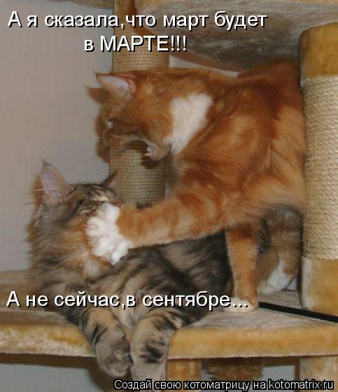 Котоматрица: А я сказала,что март будет в МАРТЕ!!! А не сейчас,в сентябре...