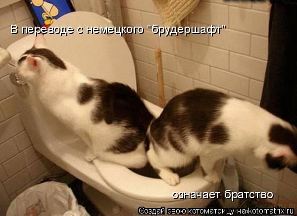"""Котоматрица: В переводе с немецкого """"брудершафт"""" означает братство"""