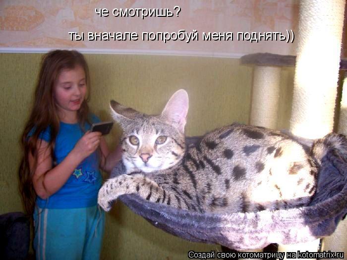 Котоматрица: че смотришь? ты вначале попробуй меня поднять))