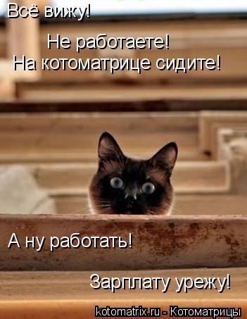 Котоматрица: Всё вижу! Не работаете! На котоматрице сидите! А ну работать! Зарплату урежу!