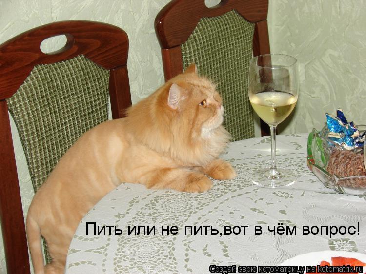 Котоматрица: Пить или не пить,вот в чём вопрос!