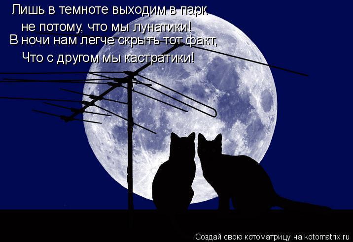 Котоматрица: не потому, что мы лунатики! Что с другом мы кастратики!  В ночи нам легче скрыть тот факт, Лишь в темноте выходим в парк