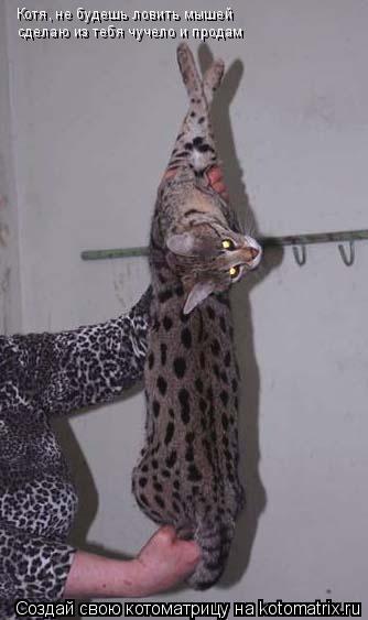 Котоматрица: Котя, не будешь ловить мышей сделаю из тебя чучело и продам