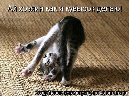 Котоматрица: Ай хозяин как я кувырок делаю!