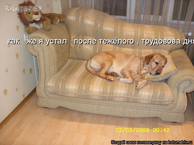 Котоматрица: как   же я устал   после тежёлого , трудовова дня!