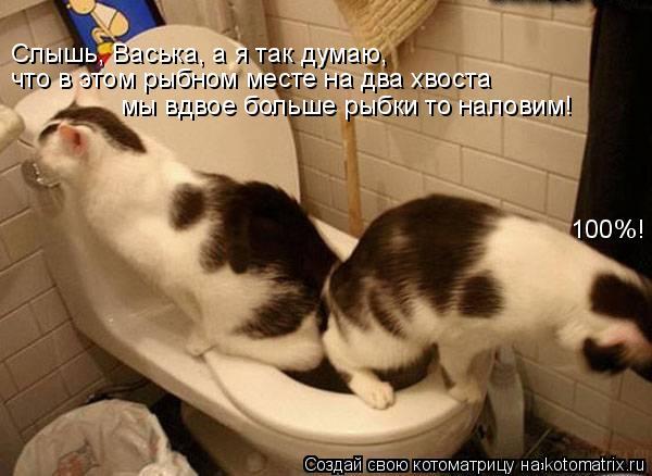 Котоматрица: Слышь, Васька, а я так думаю,  что в этом рыбном месте на два хвоста  мы вдвое больше рыбки то наловим! 100%!